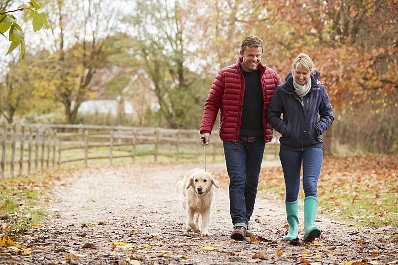 中老年伴侣,秋天,拉布拉多犬,50到59岁,40到49岁,中老年人,伴侣,狗,小路