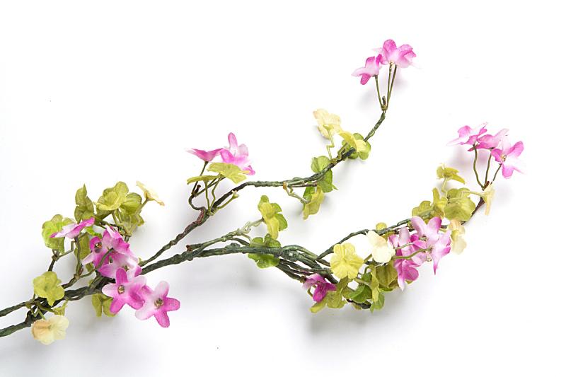 枝,叶子,白色背景,分离着色,水平画幅,无人,夏天,模板,植物,清新
