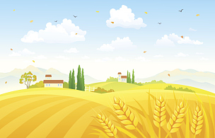 田地,秋天,小麦,农作物,绘画插图,天空,风,山,计算机制图,计算机图形学