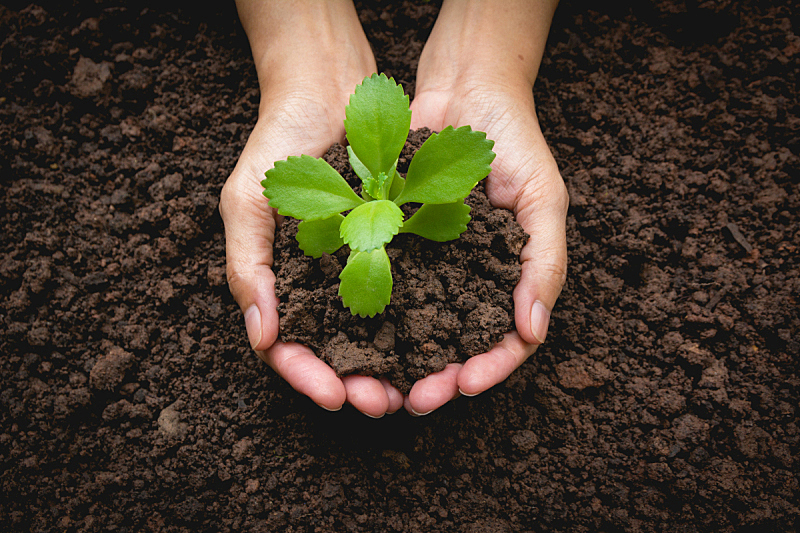 小的,手,拿着,概念,环境,植物群,绿色,新的,水平画幅,符号