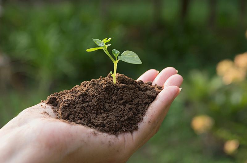 小的,手,拿着,概念,环境,植物群,绿色,新的,水平画幅,古老的