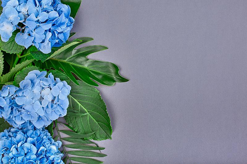 婚礼,八仙花属,背景,叶子,蓝色,平铺,蓝色背景,绿色,做,上装