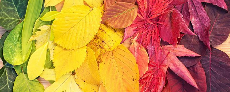 彩虹,叶子,秋天,全景,多色的,褐色,水平画幅,户外,乡村风格,植物