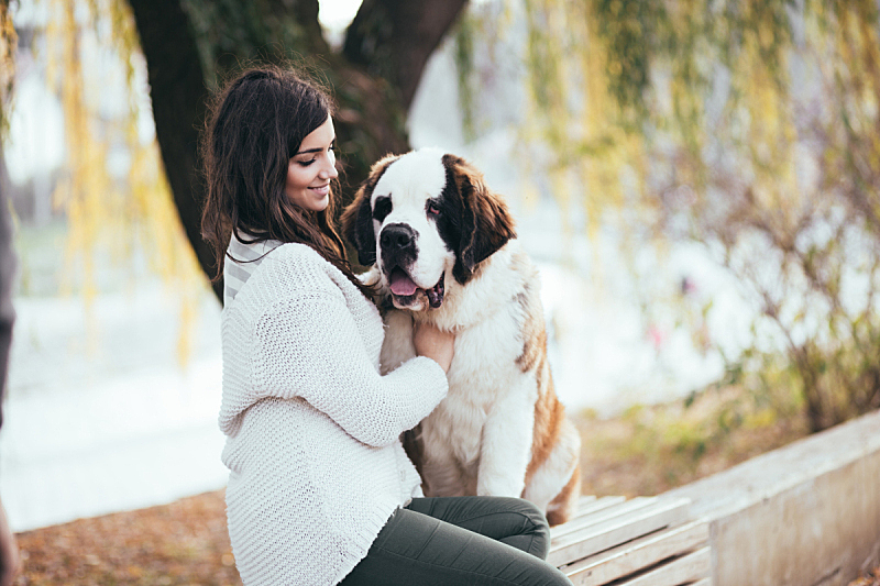 圣伯纳犬,女人,小狗,美,公园,长椅,水平画幅,美人,巨大的,户外