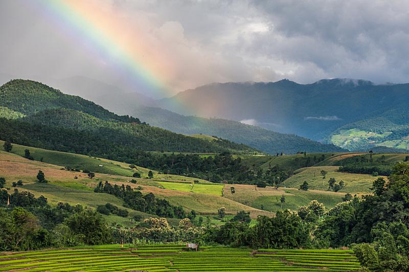 泰国,稻,梯田,自然,水平画幅,无人,有机食品,夏天,户外,水稻梯田