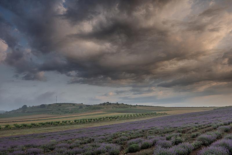 熏衣草,田地,黎明,普罗旺斯,天空,芳香的,水平画幅,无人,早晨,夏天
