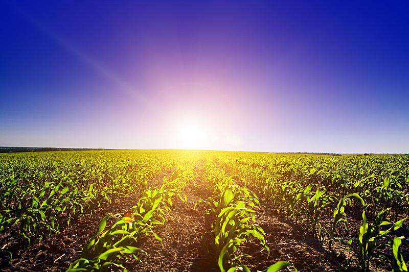 田地,绿色,自然,草地,草原,水平画幅,无人,蓝色,夏天,户外