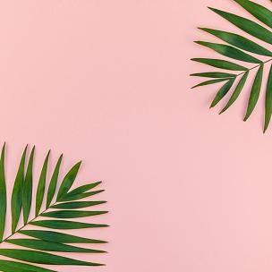 棕榈叶,创造力,粉色背景,鸡尾酒,边框,热带气候,模板,背景,雨林,时尚