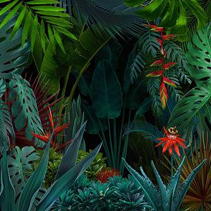 色彩鲜艳,背景,夜晚,热带雨林,超现实主义的,暗色,清新,热带气候,泰国,干酪藤