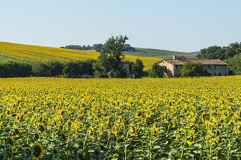 马尔凯大区,夏天,地形,意大利,水平画幅,山,无人,古老的,户外,田地