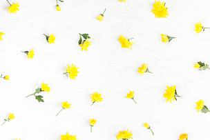 仅一朵花,黄色,边框,白色背景,贺卡,留白,高视角,古典式,夏天,生日