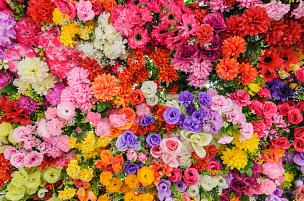 花束,多样,春天,色彩鲜艳,水平画幅,无人,玫瑰,植物,花头,花朵