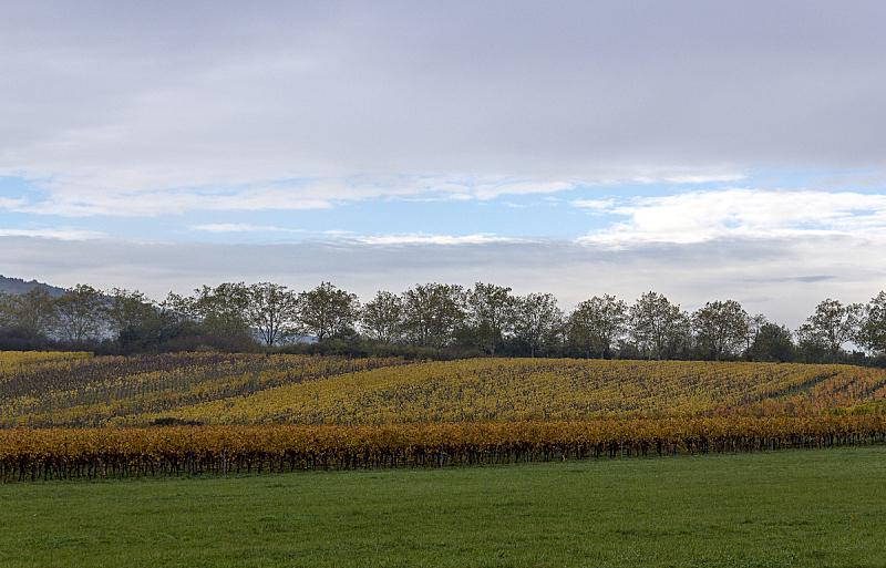 阿尔萨斯,早晨,蓝山,葡萄酒,天空,新南威尔士,水平画幅,无人,户外