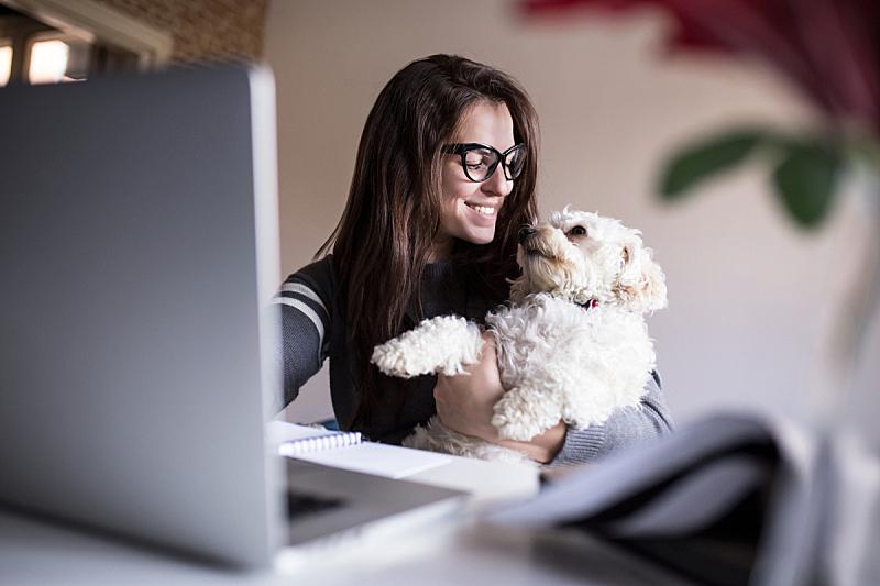 狗,女人,一个人,小的,宠物,乐趣,金融和经济,笔记本电脑,计算机,在家购物