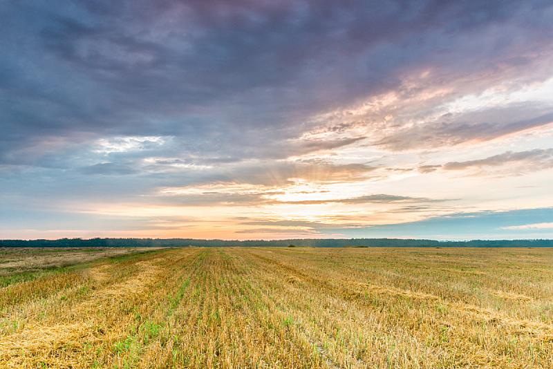 田地,自然,天空,美,草地,非都市风光,水平画幅,绿色,地形,无人
