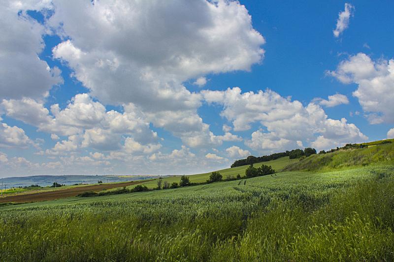 天空,草,风,水平画幅,无人,草坪,夏天,户外,干净,云景