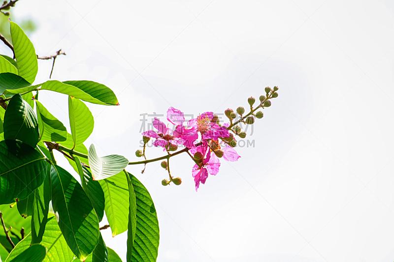 清新,泰国,复古风格,佛罗卢比斯,有蔓植物,植物,背景,户外,精神振作,自然