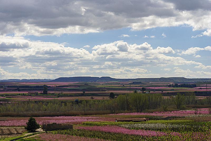 梨树,白色,粉色,春天,花朵,日光,地形,云,白昼,花