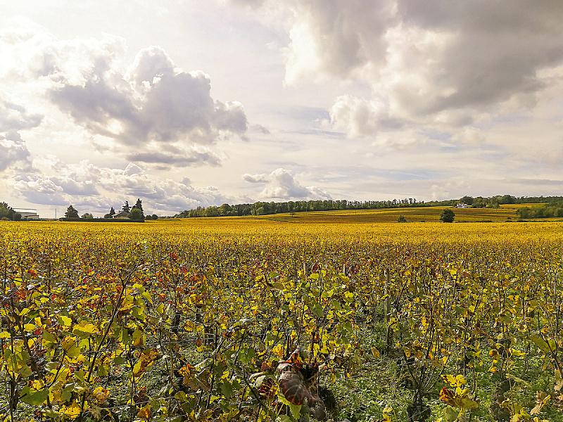 葡萄,秋天,山,田地,全景,勃艮第,法国,农业,酒瓶,葡萄酒