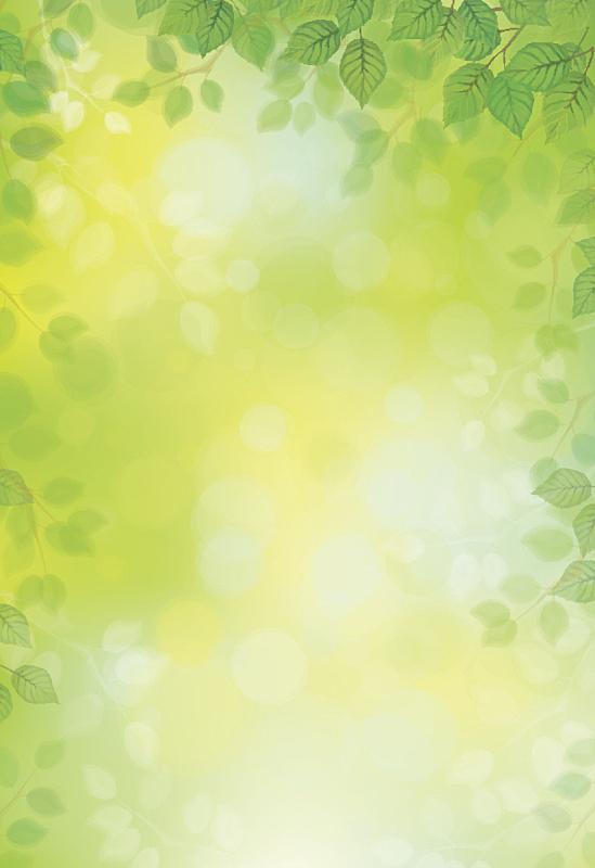 叶子,绿色,矢量,背景,绿色背景,白桦,环境保护,春天,枝,边框