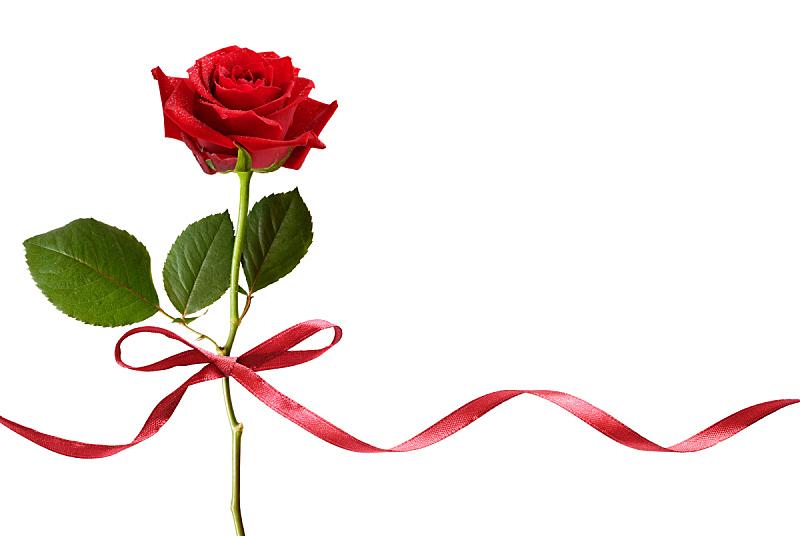 蝴蝶结,丝绸,红色,玫瑰,蛇型湖,螺旋雕刻,s形,螺旋,封锁线,留白