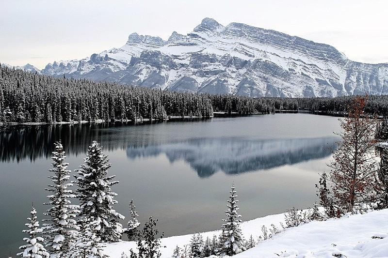 冬季仙境,班夫,冬天,图像,雪,阿尔伯塔省,加拿大,松科,无人,湖