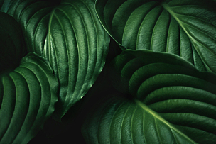 叶子,绿色,背景,枝繁叶茂,热带气候,调料,大特写,曝光过度,特写,大量物体