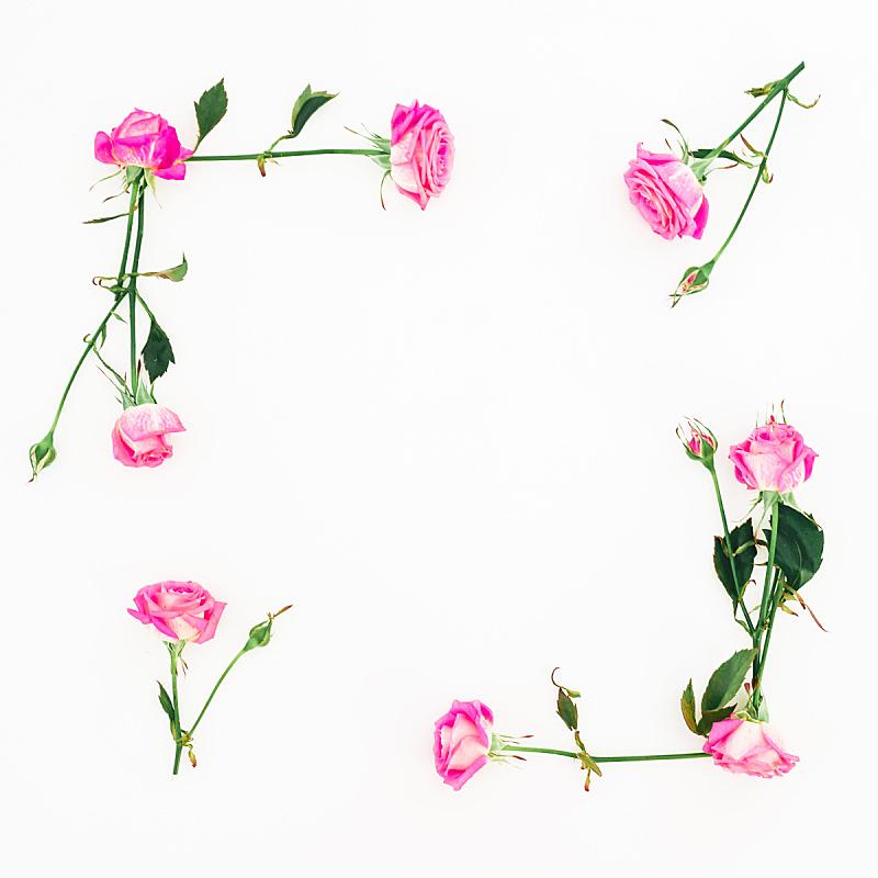 边框,情人节,白色背景,粉色,风景,叶子,平铺,玫瑰,花,构图
