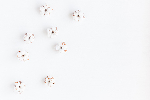 棉花,白色背景,平铺,风景,棉,爱沙尼亚,花朵,明信片,干的,农作物
