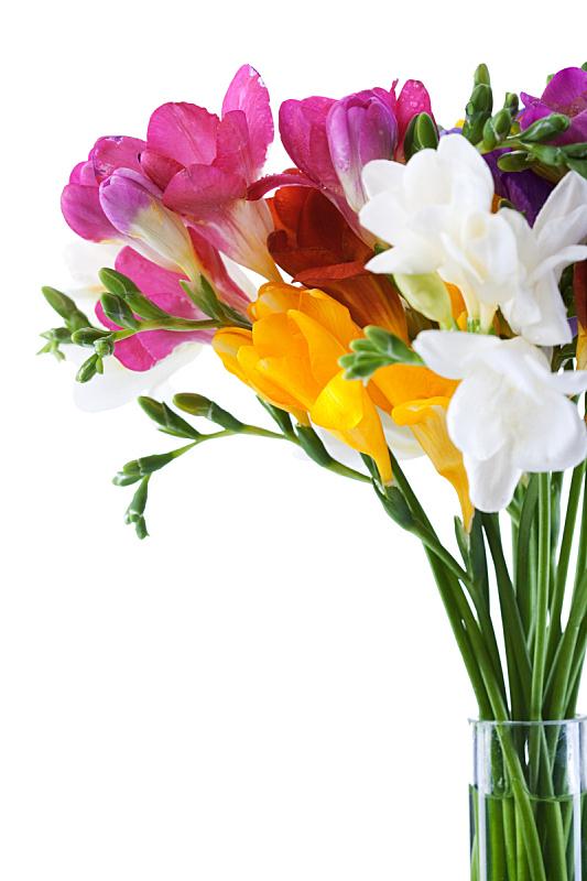小苍兰,仅一朵花,垂直画幅,番红花属,花束,植物,母亲,问候,庆祝,布置