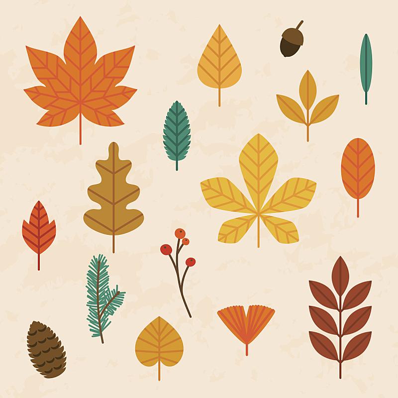 绘画插图,叶子,矢量,秋天,扁平化设计,概念,极简构图,边框,形状,九月