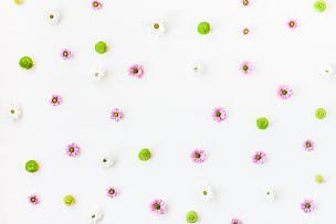 边框,白色背景,多样,多色的,爱沙尼亚,花蕾,野生植物,野花,档案,明信片