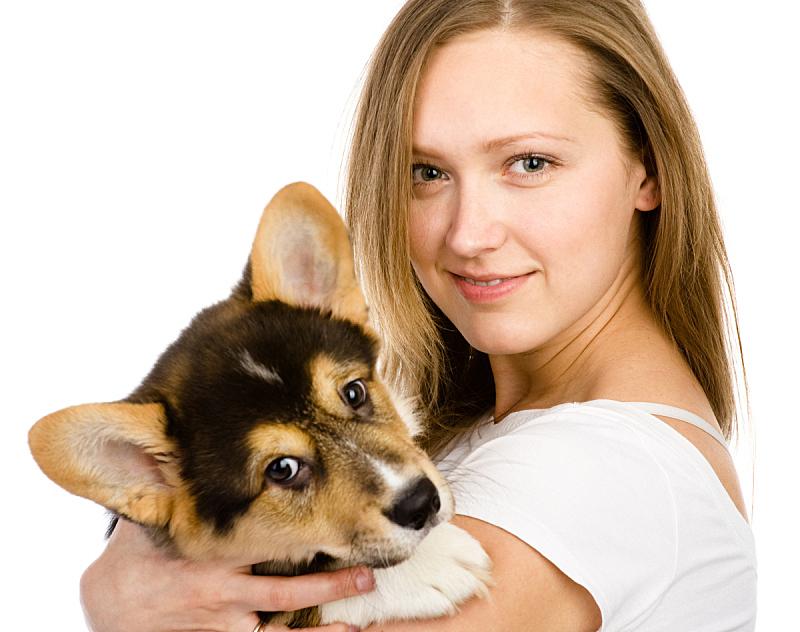 威尔士柯基犬,注视镜头,小狗,女孩,幼兽,褐色,水平画幅,白人,特写,青年人