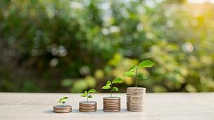 绿色,背景,垒起,特写,背景虚化,银行帐户,继任者,储蓄,时间,经济