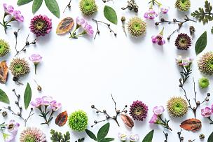 边框,白色背景,留白,水平画幅,无人,组物体,特写,明亮,白色,植物