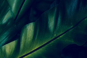 露水,雨林,绿色,蕨类,特写,美树河国家公园,热带雨林,枝繁叶茂,灌木,大特写