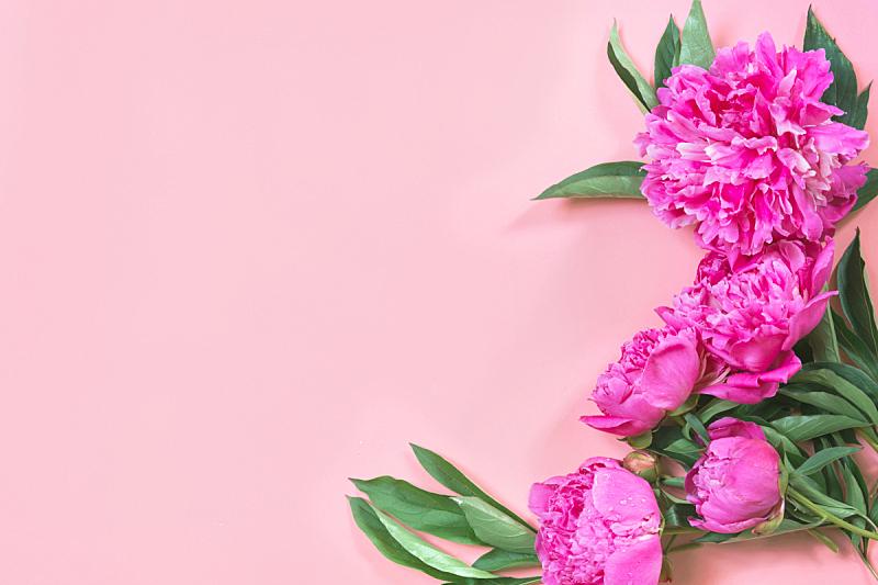 留白,边框,花束,牡丹,粉色,淡雅,自然美,平铺,接力赛,花