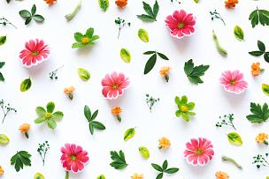花纹,色彩鲜艳,花朵,静物,多色的,组物体,春天,满画幅,多样,白色背景