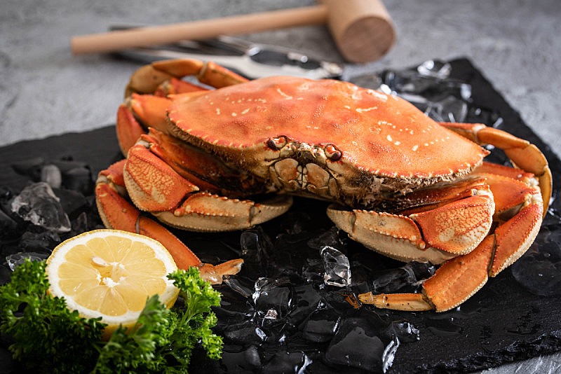 图像,煮食,丹金尼斯螃蟹,清新,水平画幅,邓杰内斯蟹,美国,爪,动物腿