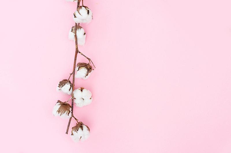 生食,棉花,枝,美,留白,水平画幅,无人,纤维,干的,乡村风格