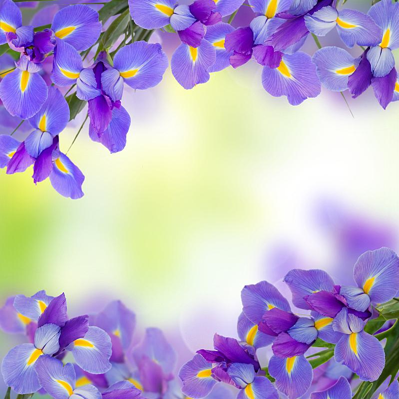特写,蓝色,垂直画幅,美,边框,无人,夏天,组物体,明亮,花束