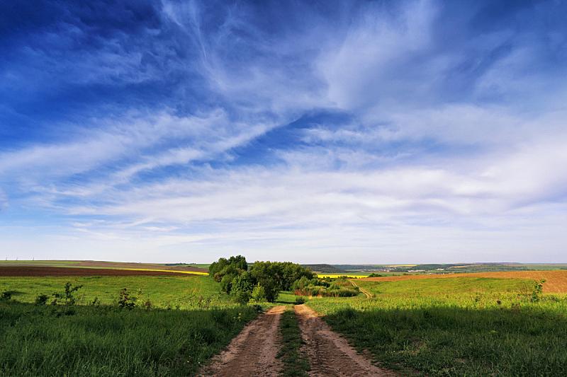 春天,黄色,田地,菜籽,芸苔,油菜花,农业,云,自然美