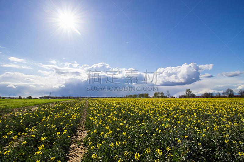 田地,油菜花,天空,水平画幅,无人,户外,乡村风格,云景,农作物,农业