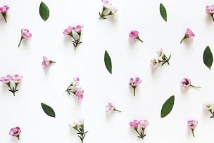 水平画幅,无人,夏天,组物体,特写,明亮,白色,植物,成组图片,清新