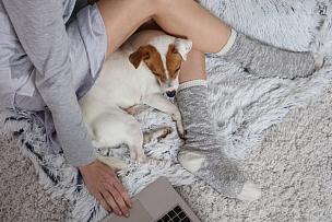 舒服,柔和,狗,家庭生活,住宅内部,女人,衣服,生活方式,使用手提电脑,睡觉