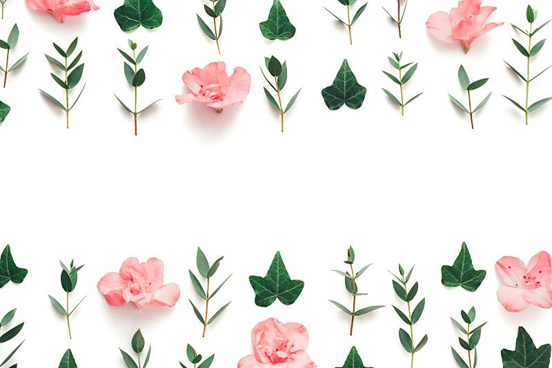 常春藤,柔和,白色背景,粉色,叶子,嫩枝,请柬,贺卡,清新,边框