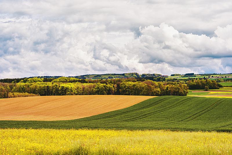 农场,瑞士,沃州,图像,春天,广州,生物学,农业,环境,背景