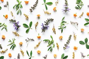 白色背景,野花,花瓣,野生植物,三叶草,静物,花头,草地,纯净,自然美