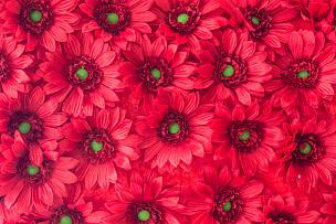 背景,多色的,美,水平画幅,紫苑,工厂,夏天,特写,花束,植物