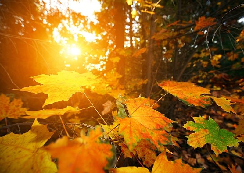 秋天,抽象,背景,留白,边框,水平画幅,无人,九月,早晨,户外